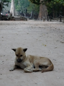 Temple dog outside Ta Prohm.