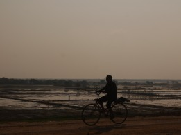 Bike ride near the rice paddies